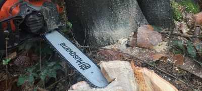 Small trees felling cut